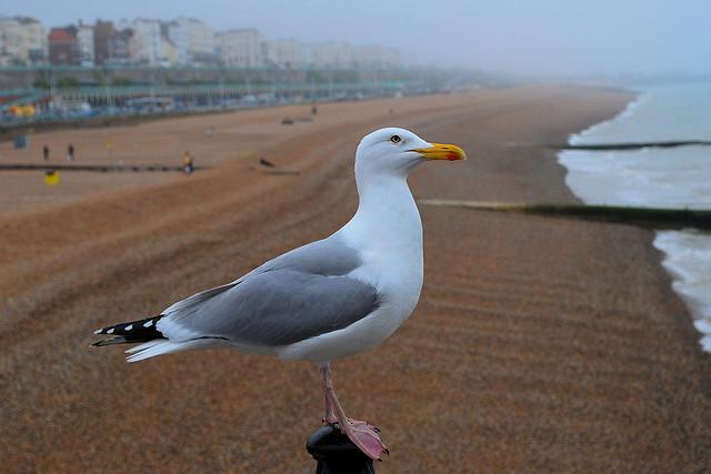 Brighton get away